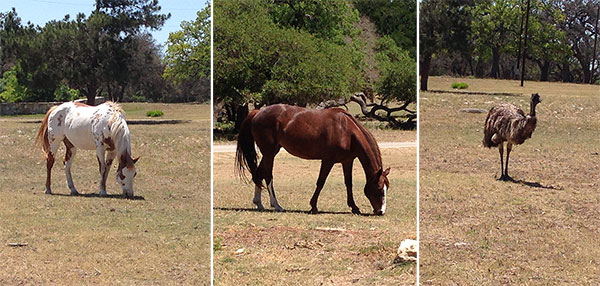 enchanted-springs-ranch-caballos-emu-cuentamesister